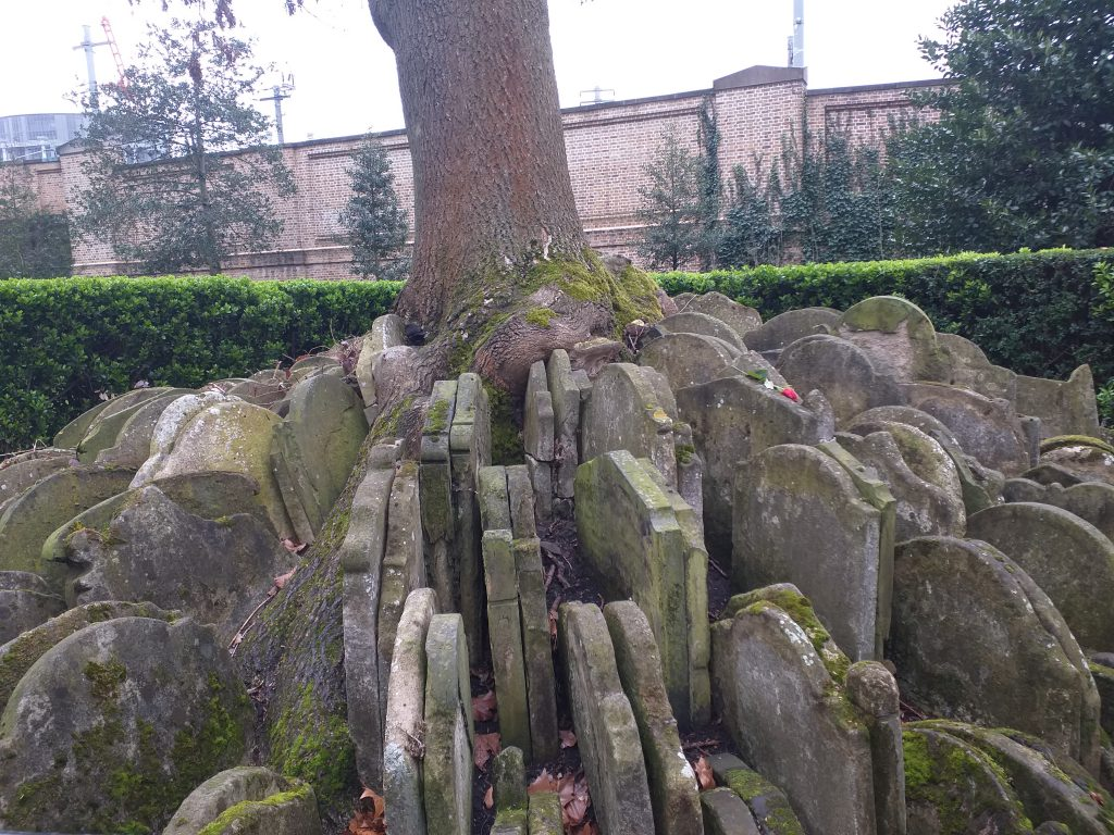 The Hardy Tree in the churchyard of St Pancras Old Church
