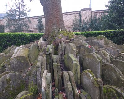 The Hardy Tree in the churchyard of St Pancras Old Church (Photo: Philipp Röttgers)