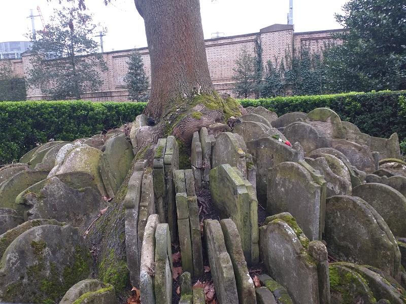 The Hardy Tree in the churchyard of St Pancras Old Church (Photo: Philipp Röttgers)